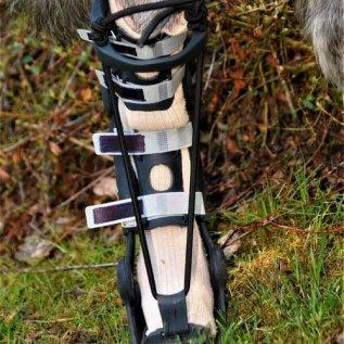 Ortéza na zadní noze psa z čelního pohledu