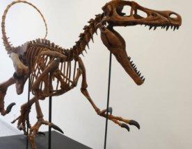 Kostra Velociraptora z 3D tiskárny Voxeljet.